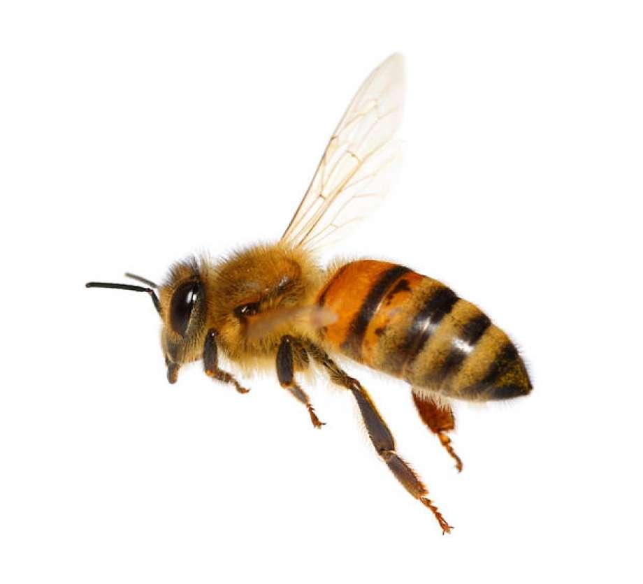Mehiläispesän asukkaat