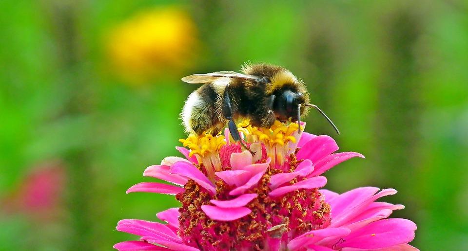 Millainen olisi maailma ilman mehiläisiä