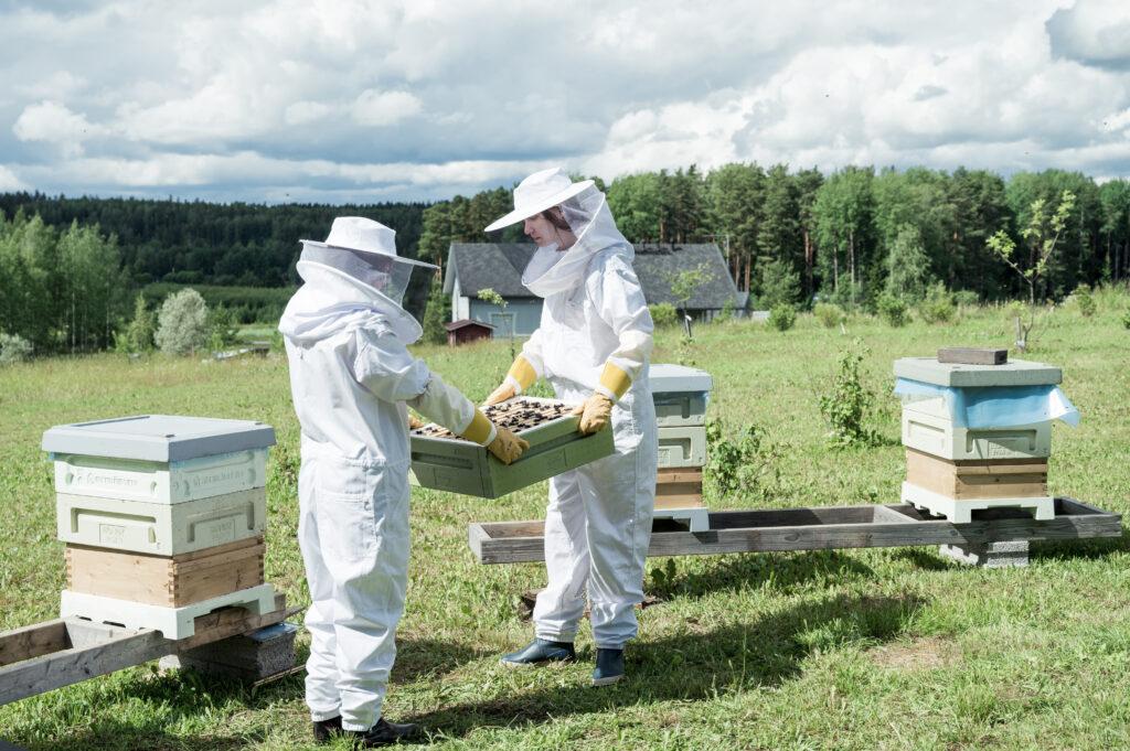 Mehiläiskesä-elokuvan kulisseissa