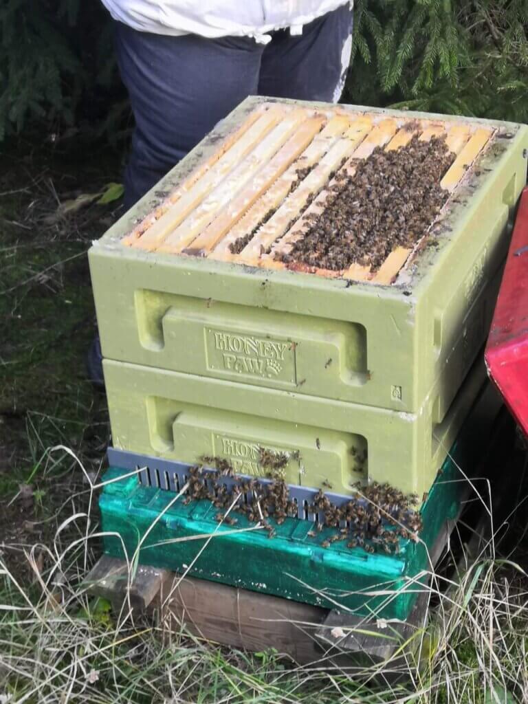 miten mehiläiset talvehtivat